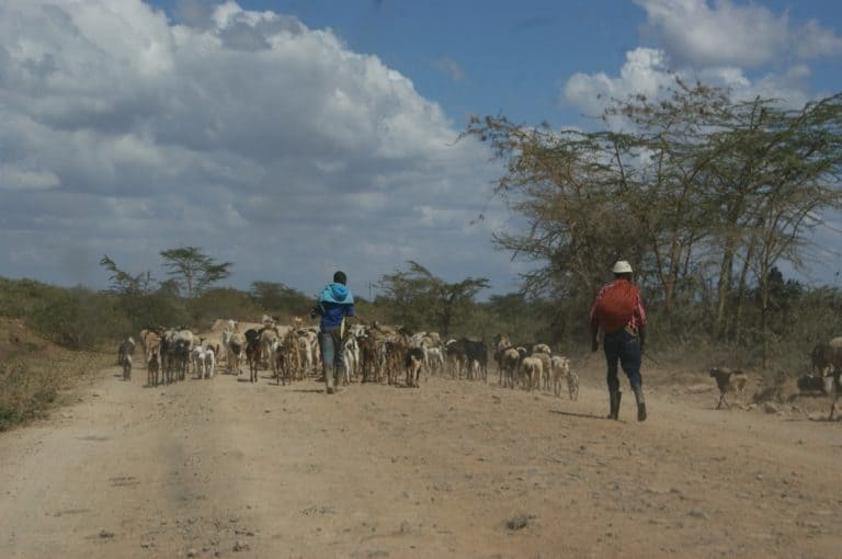 Two men walk down a dirt road with a herd of goats.
