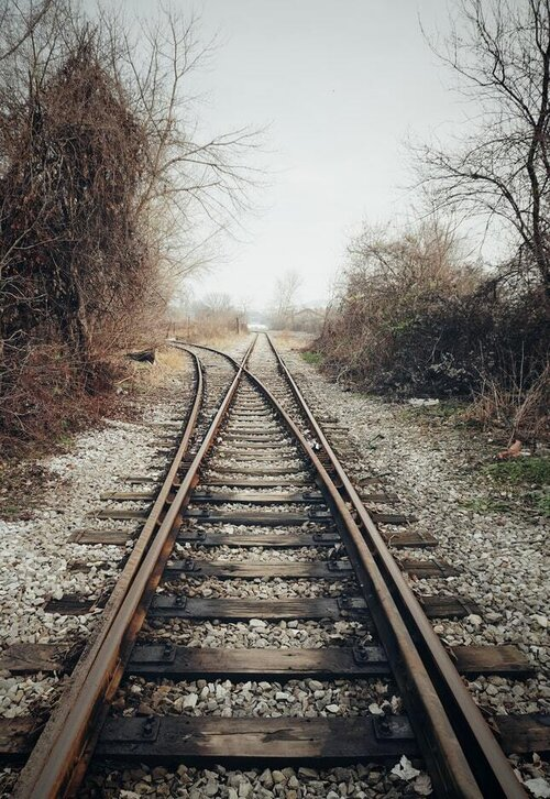 Train tracks through brush.