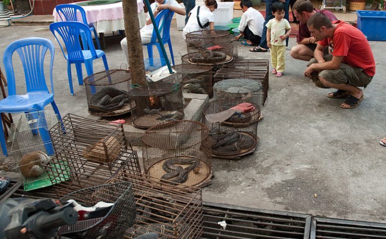 A man crouches down to look at an animal in a small cage