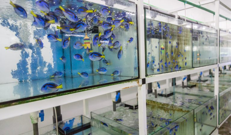 Aquariums filled with fish