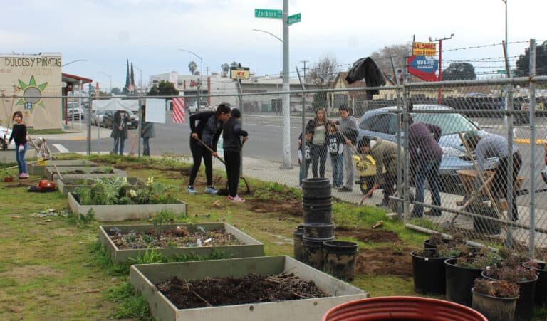People work in a garden with raised beds