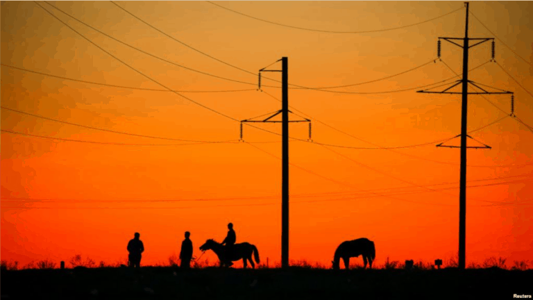 Horses graze under power lines.