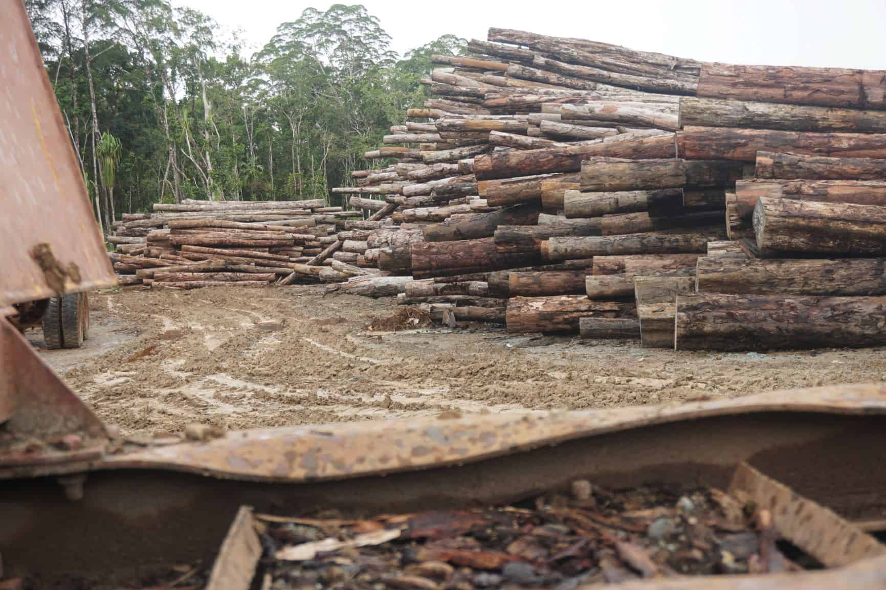 Large pile of logs