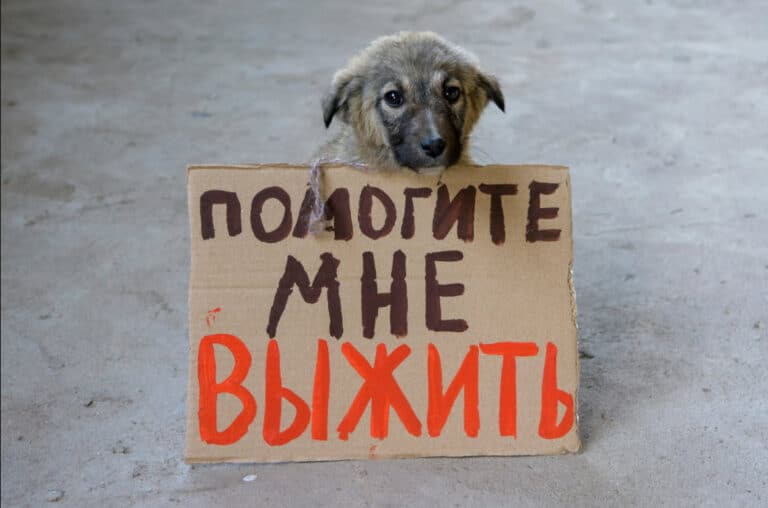 A small dog sits on the pavement with a sign in Tajik.