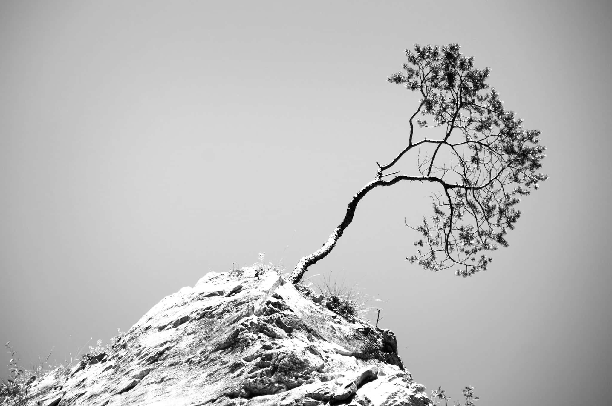 Tree growing out of a rock.