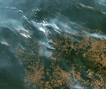 A satellite image of fires in the Amazon