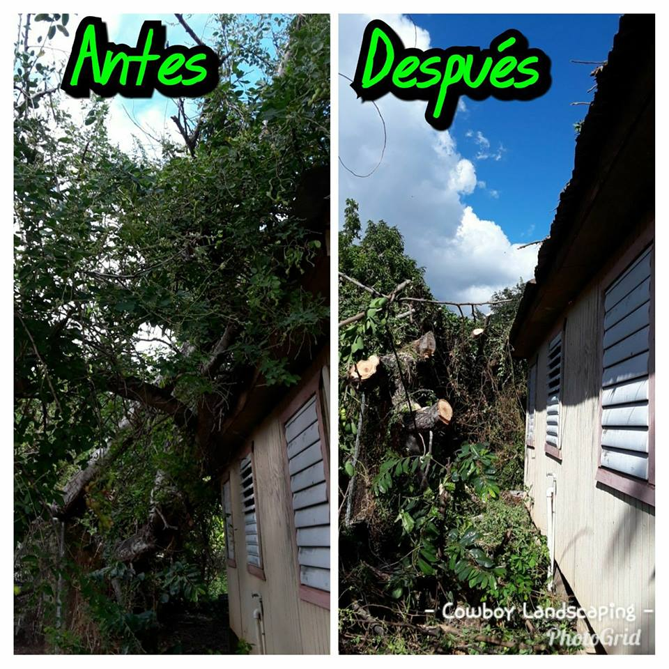 Rafael Torres' image of a tree that fell on Freddie Rodriguez's house