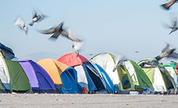 Birds fly over a row of tents