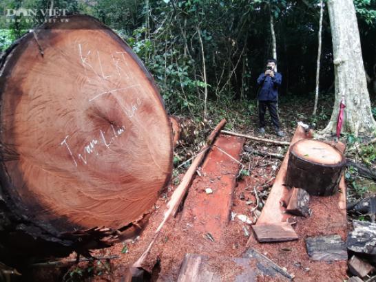 A man photographs a large tree stump