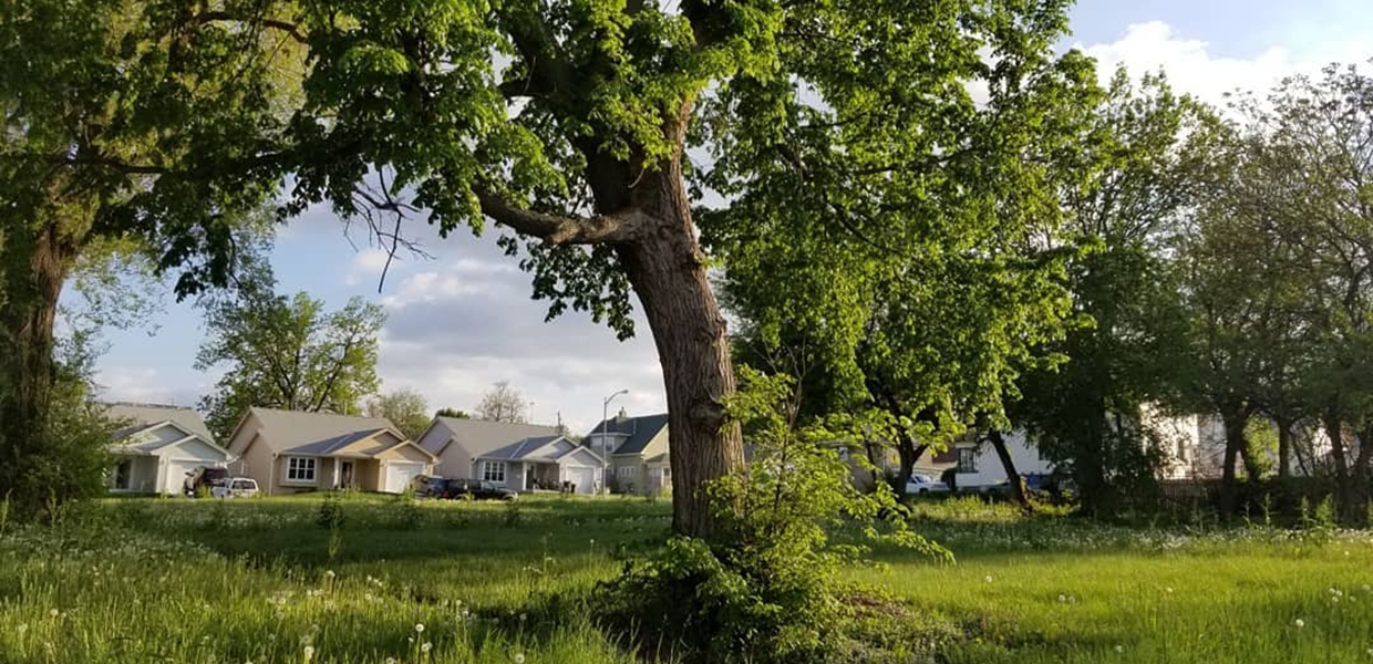 A tree stands in a grassy area; houses are in the background