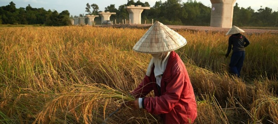 A woman wearing a sun hat kneels in a field holding rice grass