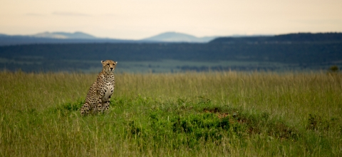 A leopard sits in the grass on a plain with mountains in the background