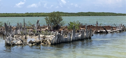 Mangroves on a small island in a river