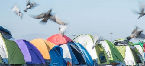 Birds fly over tents lined up on a dirt field